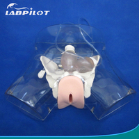 Clinical Artificial Abortion Training Model,Realistic Uterine Anatomy