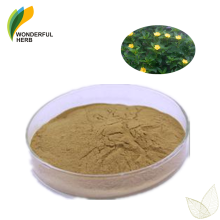 Wholesale natural powder supplement pure damiana leaf extract damiana