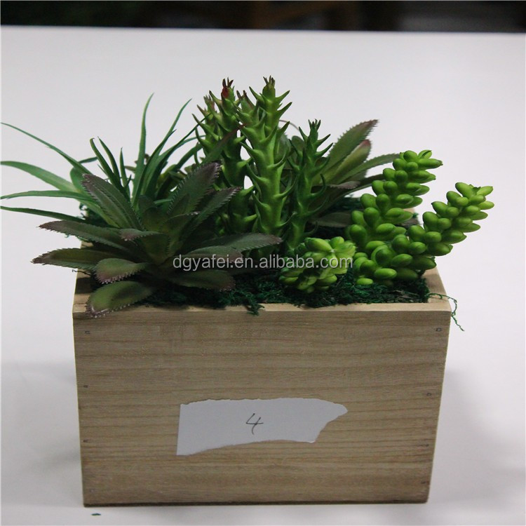 decorative succulents planting pots cubic planters of succulent plants