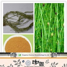 7% silica acid horsetail extract/horsetail powder// horsetail herb extract