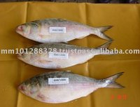 Fresh Water Frozen Fish Hilsa