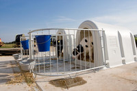 calf shelters , huts , hutches for calves