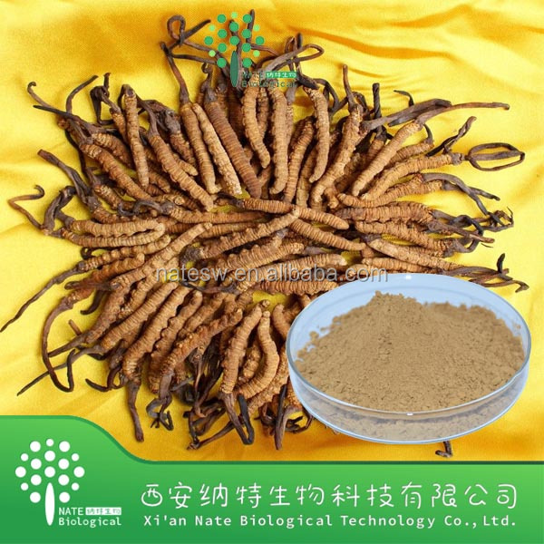 high quality Cordyceps sinensis extarct and Cordyceps sinensis powder Cordyceps Polysaccharides 10~50%
