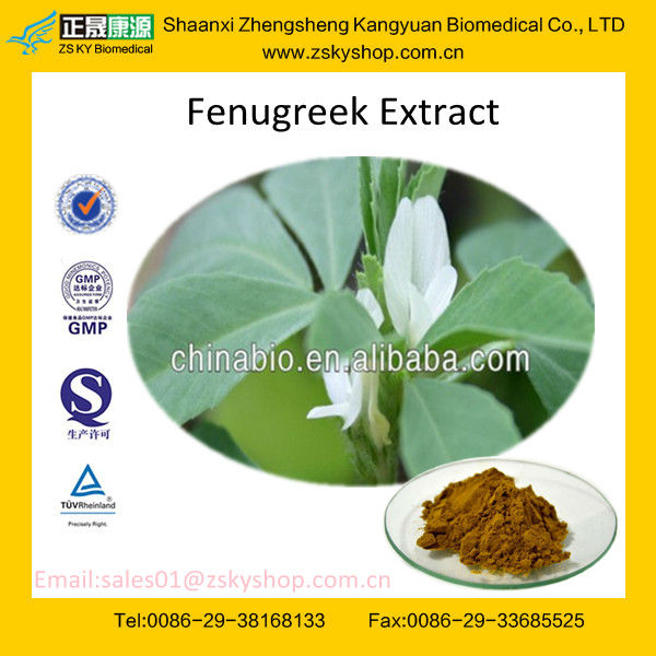 GMP &TUV certified factory supply high quality Fenugreek Powder Extract with Furostanol saponins