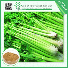 Trustworthy China supplier celery seed extract 10:1