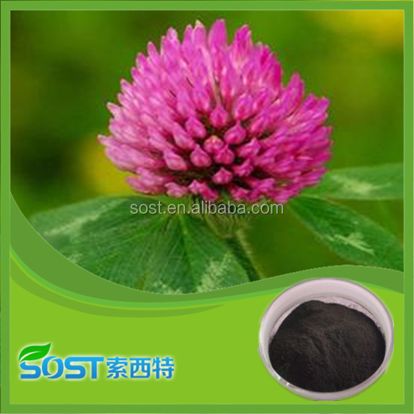 Chinese herbal medicine extract Red Clover Extract hot