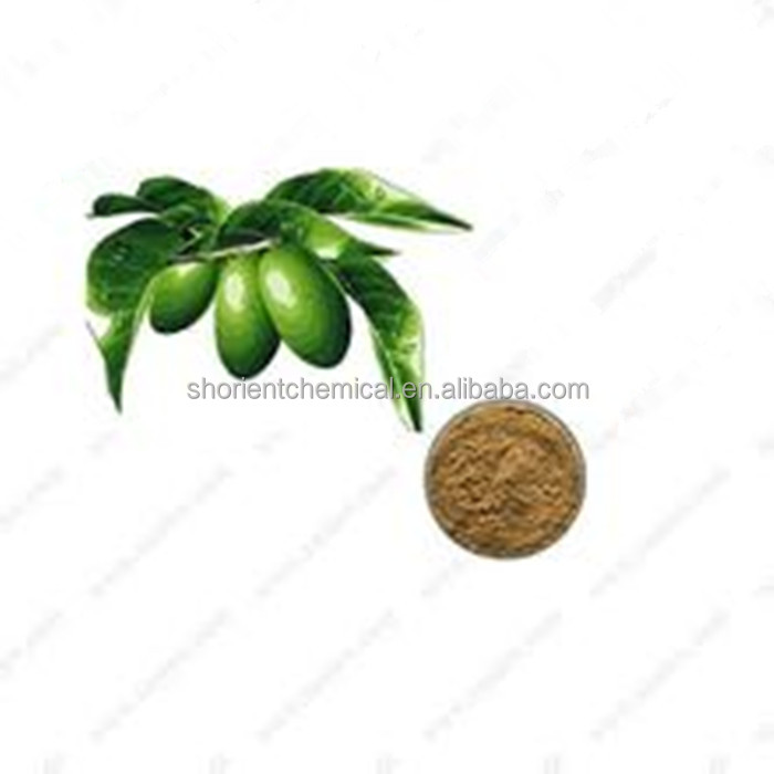 best quality olive leaf extract / oleuropein 40% for skin care