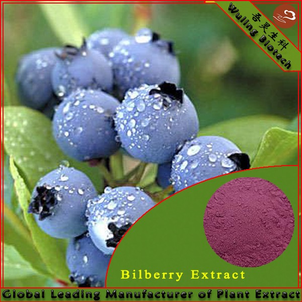 Natural Dried Bilberry Extract 25%