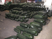 Chinese Cheap Price And Best Quality About Winter Melon