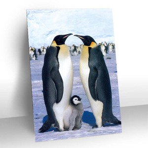 Sweety animal penguin family 3d picture