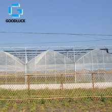 Agricultural Tunnel Greenhouse with Poly Film