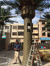 decorative street decor 6m tall plasticsteel artificial fake fan date palm tree plant E1213H4
