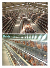 10000 layer chickens farm bird cage for sale