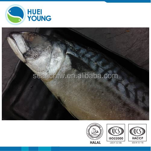 140g-170g best quality Light Salted Whole Mackerel <strong>Fish</strong>