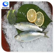 Frozen Seafood Sardine Fish best selling products
