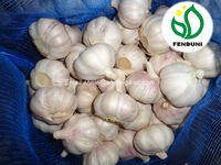 Normal White Garlic 10kg/bag from China - for South America