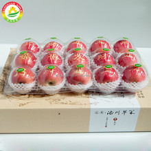 Chinese Supplier Exporting Fuji Apples Fresh Wholesale Prices Apple Fruit