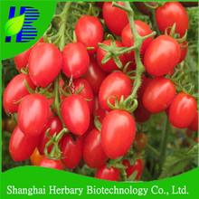 Hot sale mini vegetable seeds cherry tomato seeds