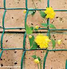 50MM green plastic fencing climbing netting for plant bean growing