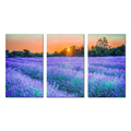 3 Pieces Canvas Wall Art Amazing Artwork Purple Lavender at Sunset Landscape Picture With Frame Ready to Hang Canvas Set