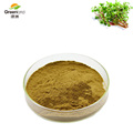 Greenland 100% Natural China Plant extract Purslane portulaca oleracea Powder