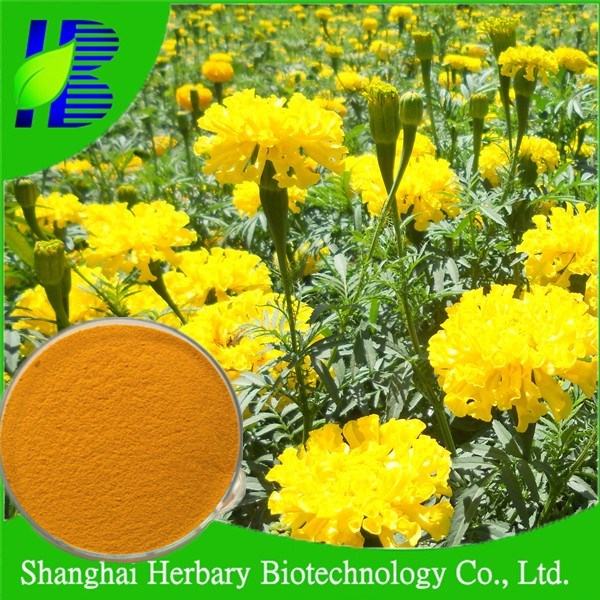 Food Grade Lutein And Zeaxanthin From Marigold For Protecting Eyesight