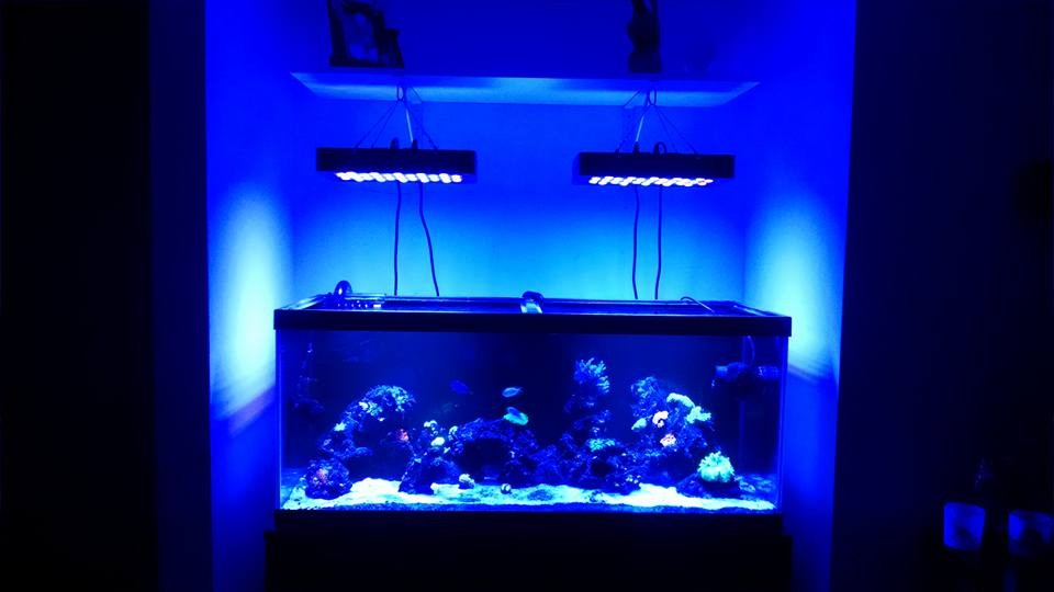 Dimmable Led Coral Reef Tank Light 165W Led Aquarium Light Marine Light