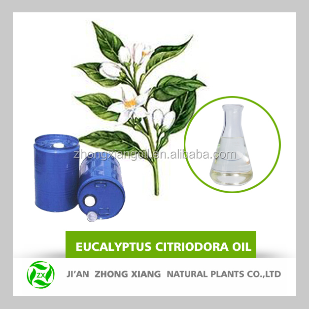 China pure eucalyptus citriodora oil