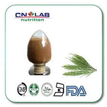 Qualified Natural Horsetail Grass Extract Powder