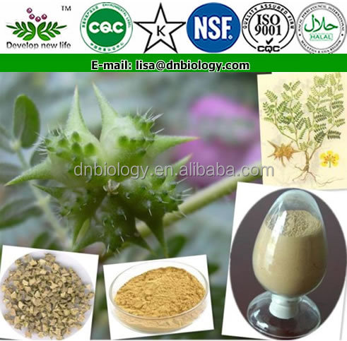 HOT selling enhances sexual functions natural plant extract tribulus terrestris extract penis strong medicine