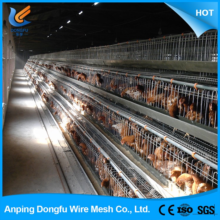 Wholesale china chicken cage layer poultry for sale price