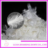Leading Supplier CHINA Duck Goose Feathers