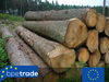 Pine and fir logs