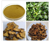 High Purity Chinese Herb Plant Atractylodes macrocephala Koidz P.E. Powder