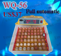 fish incubator automatic egg incubator for chicken WQ-56 mini egg incubator