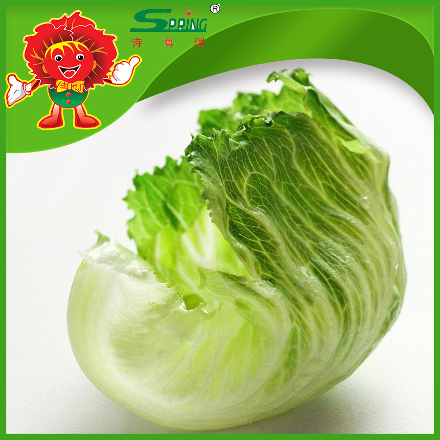 without pesticide Natural type romaine lettuce limited chemical fertilizer