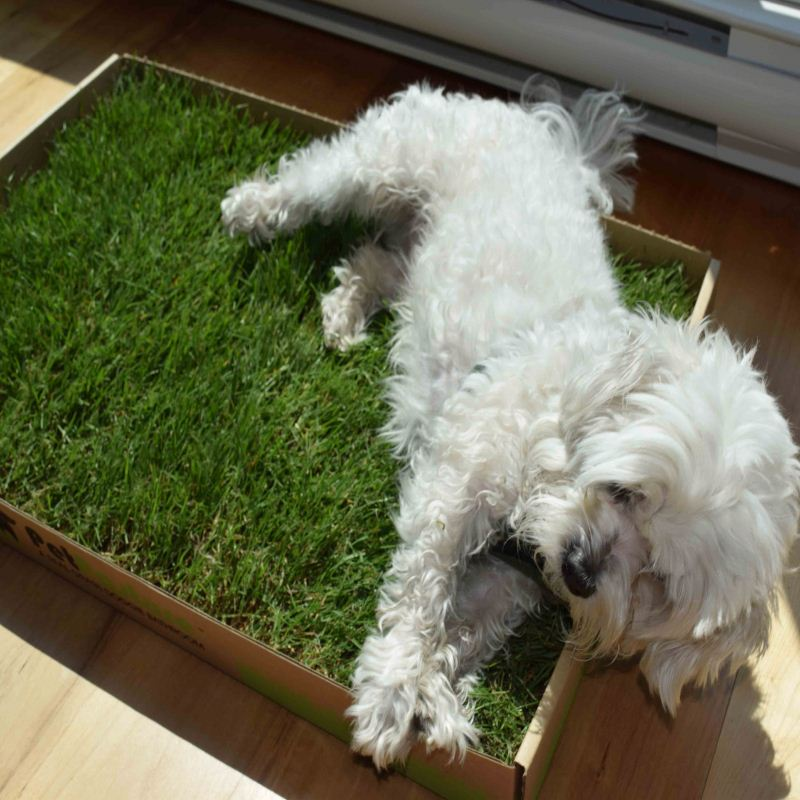 Wholesale Washable Pet Training Mats