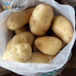 Green farm plant holland fresh potatoes wholesale