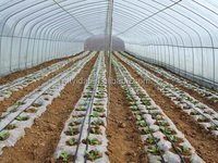 tape drip irrigation with good quality