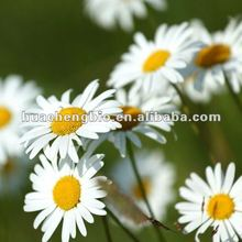 100% Natural Chamomile P.E