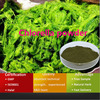 GMP Factory supply high quality low price natural Chlorella powder