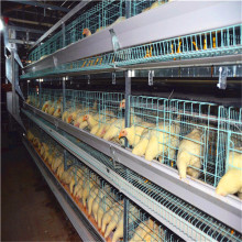 Discount,factory directly sales poultry farming machine cages for chicken layer(professional factory)