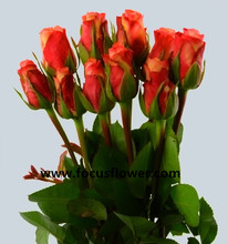 Fragrant aroma crazy selling fresh cut roses from ecuador fresh cut flowers colombia golden rose for decoration from rolane
