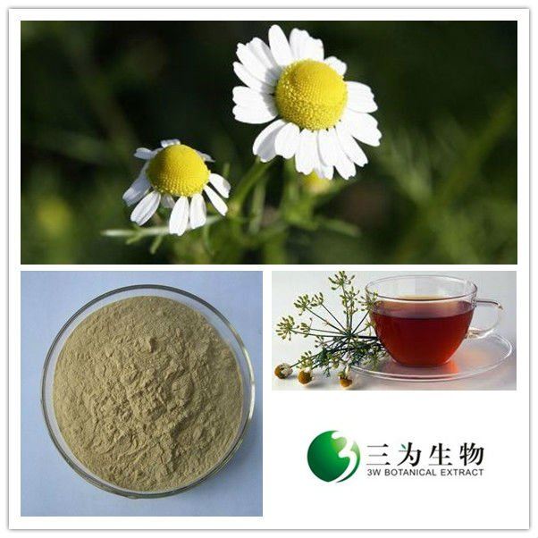 Beautiful Flower Chamomile Flower Extract From GMP Manufacturer