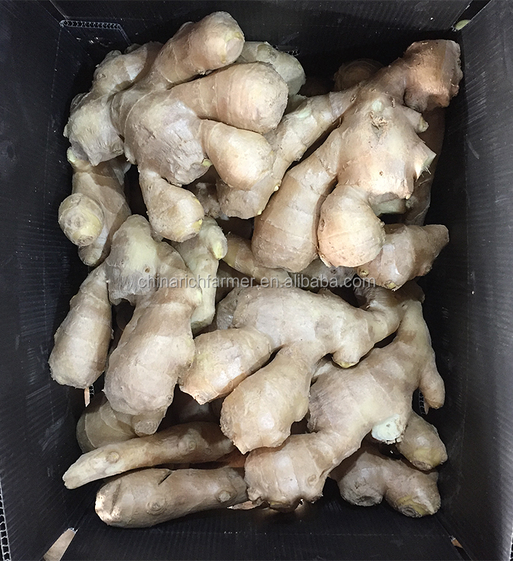 Chinese mature importer of fresh vegetables air dried ginger in uk