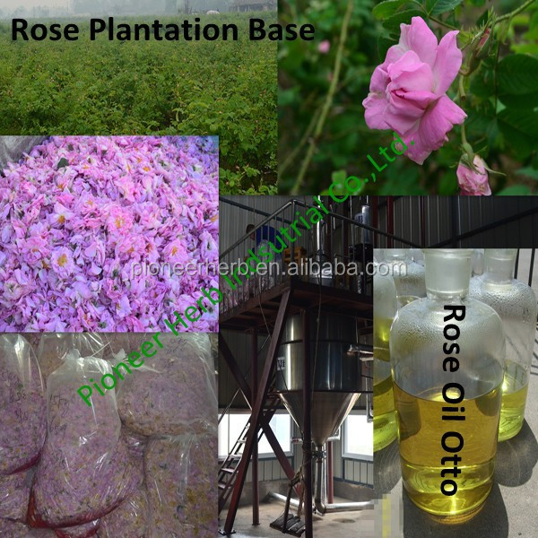 100% pure Rose Essential Oil (Rose Otto)