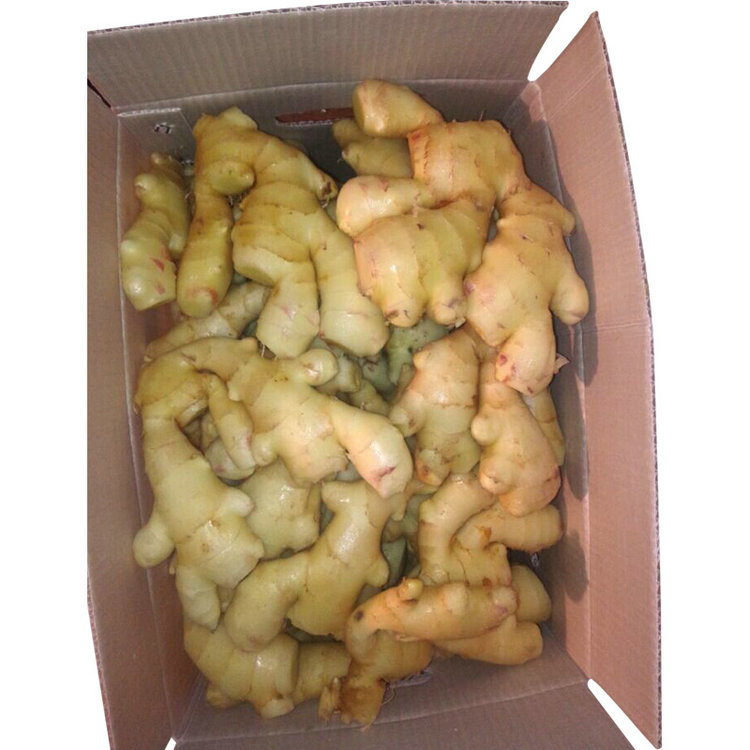 2017 Top Quality new harvest elephant ginger rate with low price