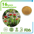 Factory supply Rhodiola extract 1% Salidroside