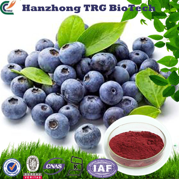 dry fresh bilberry with CE certificate