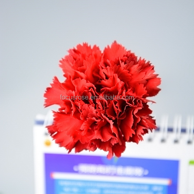 Alibaba china Mastor carnation flowers to florist supplies